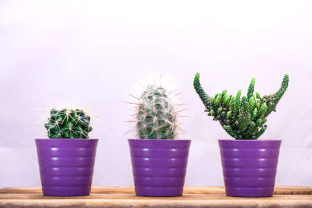 medium group of objects: Three cacti in a row on a wooden table.