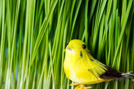 Yellow easter bird sitting in the grass during spring. Copy space on the left.