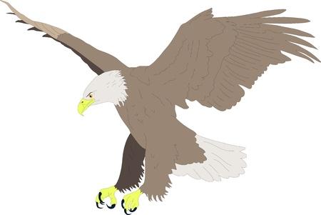 Ilustración Del Majestuoso Los águila Calva Adulto Volando Con Fondo ...