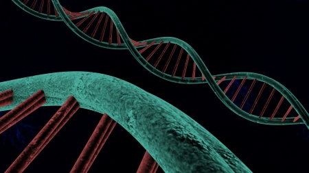 deoxyribonucleic: chains of deoxyribonucleic acid made in 3D
