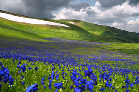 Flowers field and white ICE from ALtay photo