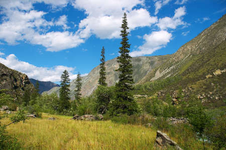 altay: Green firs and blue skies on the Altay mountains-02