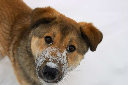 Ears, eyes, nose and snow photo