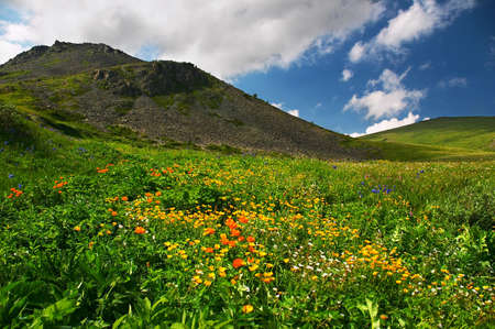 altay: Flowers and mountains, Altay Stock Photo