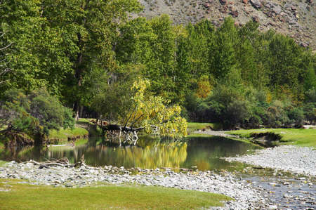 altay: poplar, turquoise river and mountains, Altay