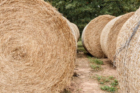 stocked: Hay stocked for the winter.
