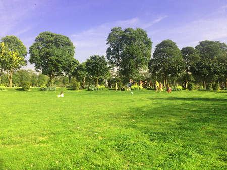 l agriculture: Green nature landscape