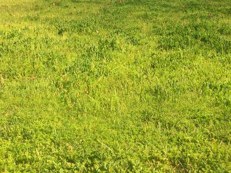 green nature: Green nature landscape