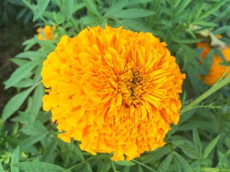 l natural: flower