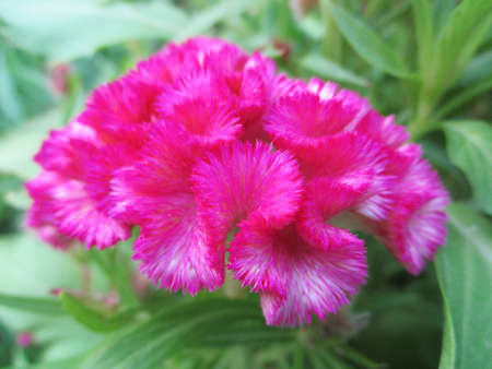 colorfull flowers  green nature 스톡 콘텐츠