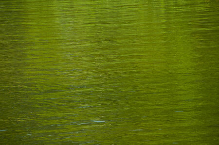 Green reflections in water Stock Photo