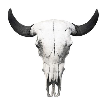 animal skull: Ox skull on white background Stock Photo