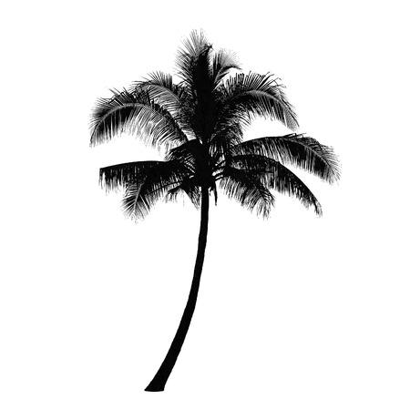 고립 된: 코코넛 팜 트리 실루엣, 벡터