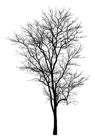지점 나무 실루엣 스톡 콘텐츠 - 34972112