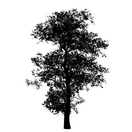 Árbol de la silueta