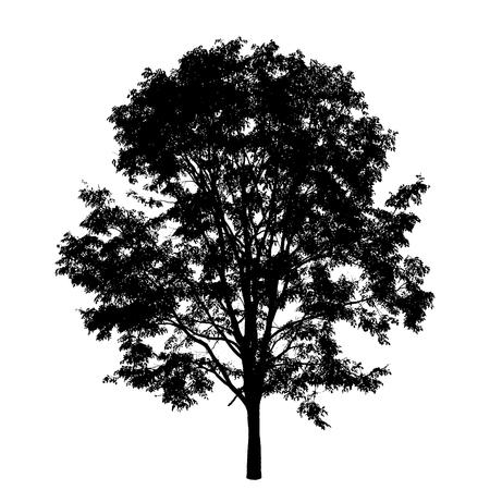 나무는 흰색 배경에 고립