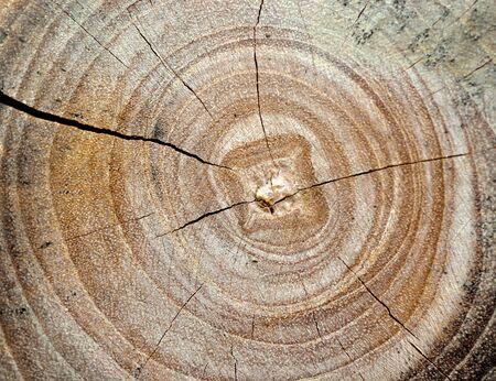 crevasse: Closeup of old cracked wood log