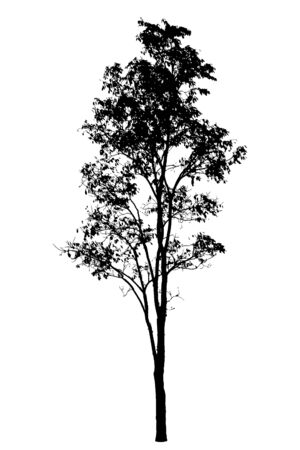 tree shape': Tree silhouette