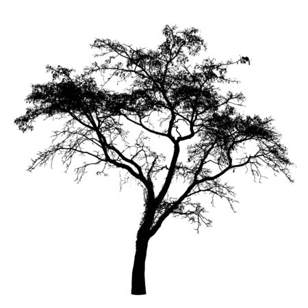 wood creeper: Tree silhouette