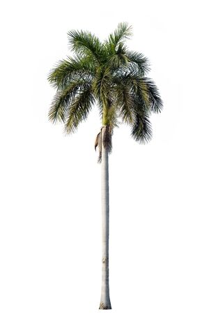 royal background: Royal palm blossom isolated on white background