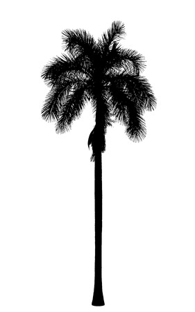 Old royal palm silhouette