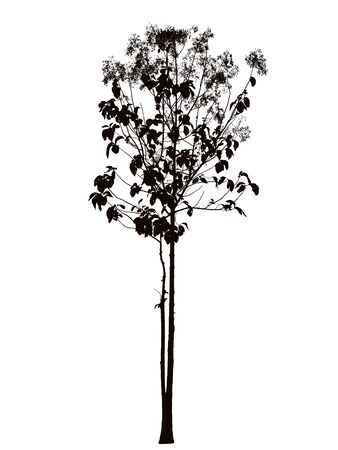 teak: Tree blossom silhouette : vector Stock Photo