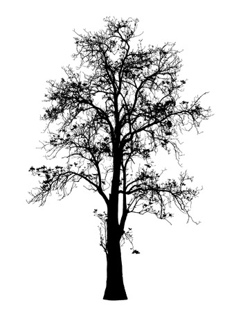 나무 실루엣 스톡 콘텐츠 - 39230863
