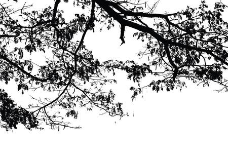 Pluie branche d'arbre: Vector Banque d'images - 43440710