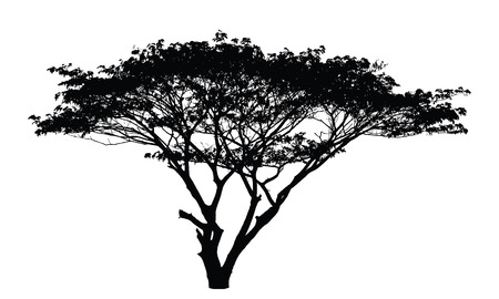 雨の木のシルエット: ベクトル