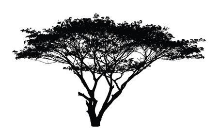 arboles frondosos: Silueta del árbol de lluvia: vector