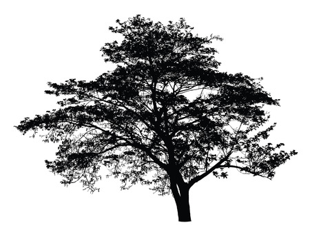 single tree: Big tree silhouette