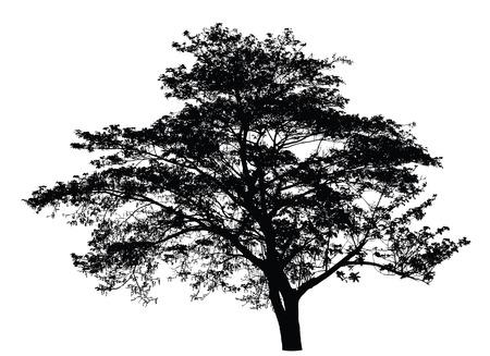 Silueta del árbol grande