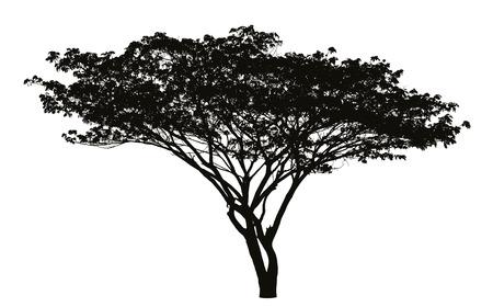 큰 나무 실루엣
