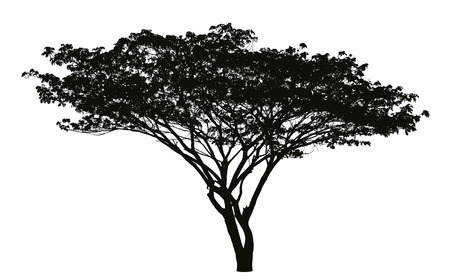 Big tree silhouette
