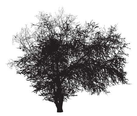 Tree silhouette : Ziziphus mauritiana Ilustração
