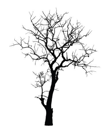 Dead Tree sans feuilles