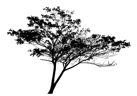 Tree silhouette on white background  Vettoriali