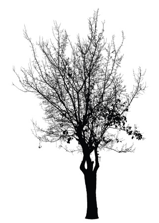 high detailed: Tree silhouette
