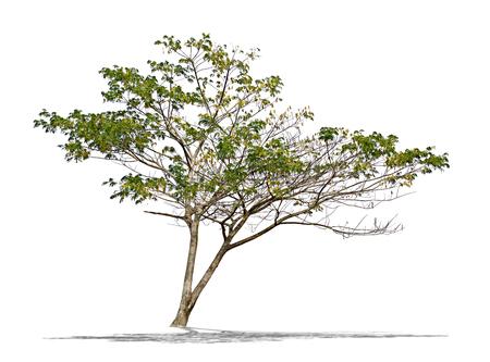 tree isolated: Tree on white background Stock Photo