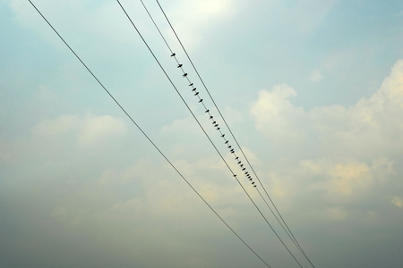 bandada de p�jaros: Swallows sitting on  the power cable with cloudsky