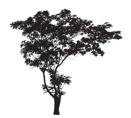 리드 나무 실루엣 스톡 콘텐츠 - 43652196