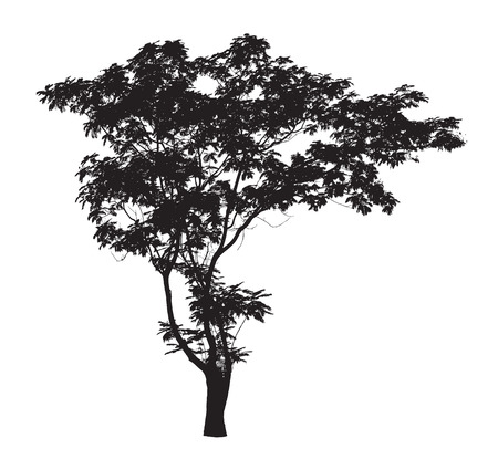 Lead Tree silhouette Illustration
