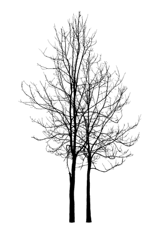 bleak: Two winter trees on a white background