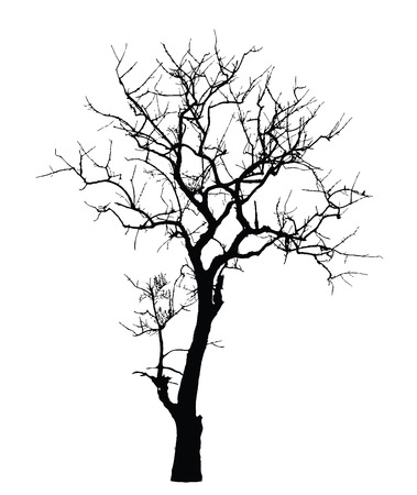 drawing trees: Dead Tree without Leaves : Vector