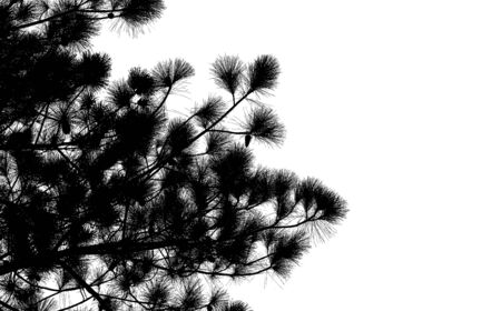 pine tree branch: Pine tree branch silhouette : Vector Stock Photo
