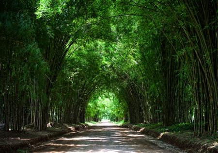 Tunnel bamboeboom Stockfoto