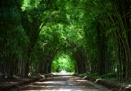 Tunnel bamboo tree Stock Photo