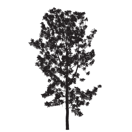 backgorund: Tree Silhouette Isolated on White Backgorund : Vecrtor