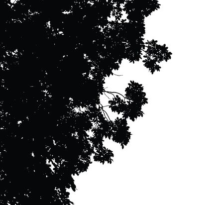 branches silhouette: Tree and branches silhouette : detailed vector illustration Illustration