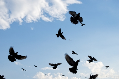 palomas volando: Palomas volando en el cielo Foto de archivo